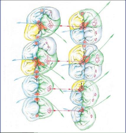 Interpretazione del concetto di ceratura in libertà centrica dinamica